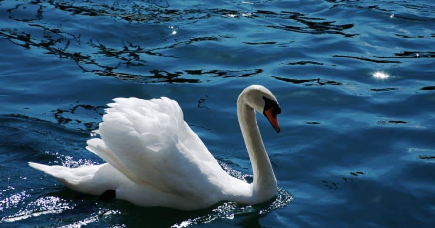 Royal Swan od Ainsworth Gaming: Úplná recenzia